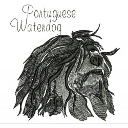 ANA PORTUGUESE WATERDOG COLORWASH