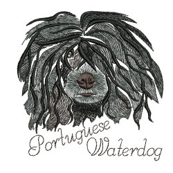 ANA PORTUGUESE WATERDOG COLORWASH 2