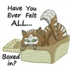 BOXED IN CAT